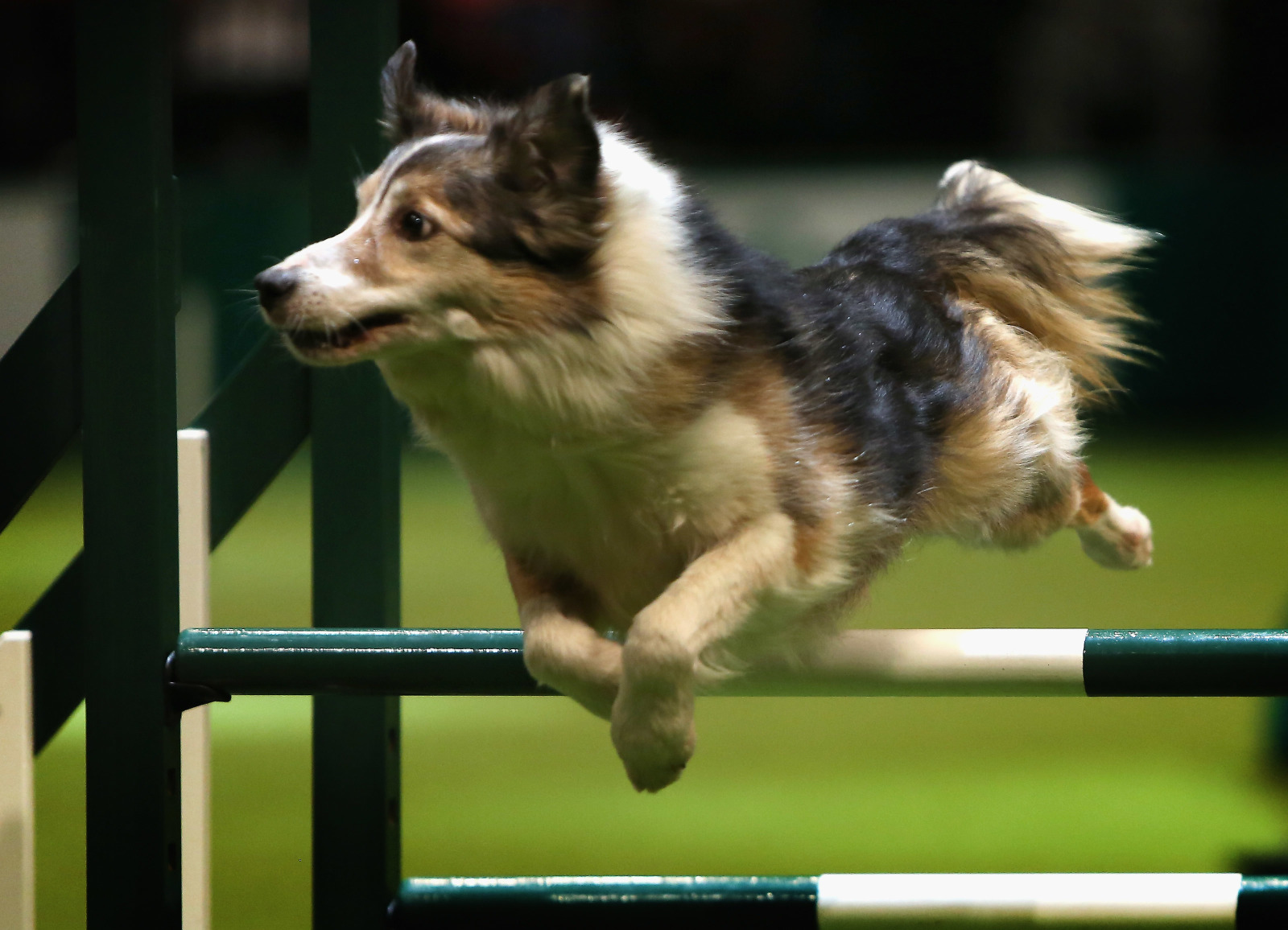 Crufts 2020 Agility Championships results